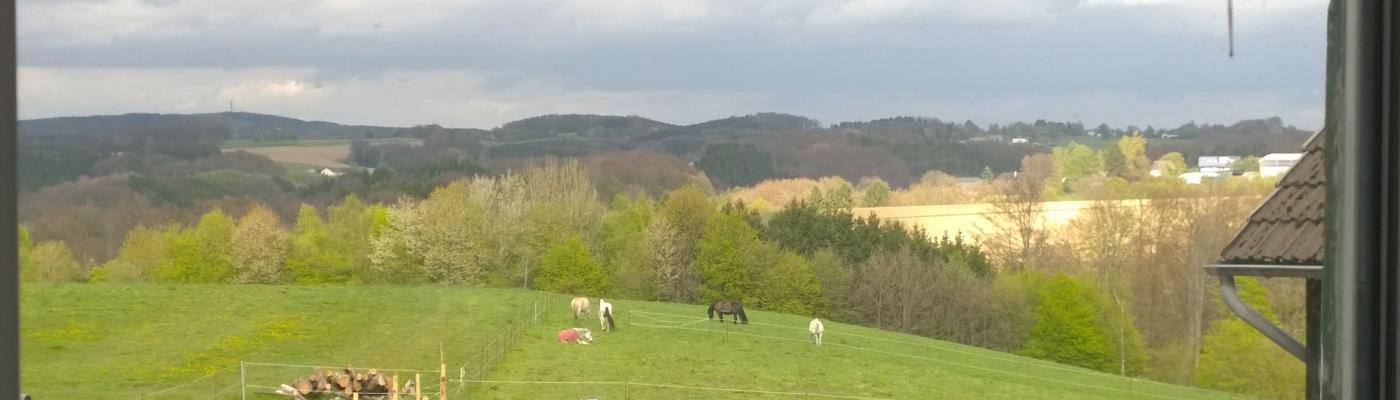 Offenstall Schwellenbach – Pensionspferdestall und Wanderreitstation